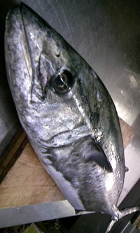 Sawaradai2_2