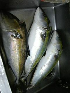 年始末の魚そろいました!