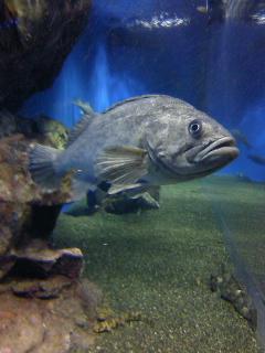 そして何故か品川水族館(笑)