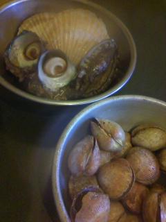 貝類もたくさん!