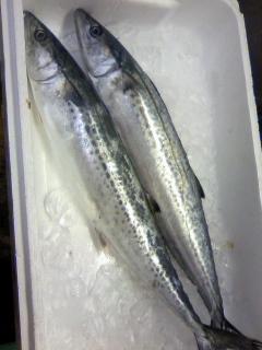 今日から6日までのお魚仕入れました!