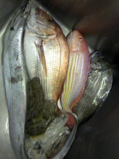 宇和島からお魚到着! 今日はゴージャスです♪