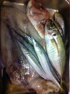 本日のお魚1