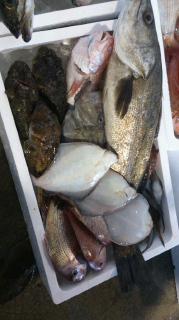 今日も村上からお魚届きますよ!! 脂の乗ったスズキ村上スペシャル♪他、ケムシカジカ等々…