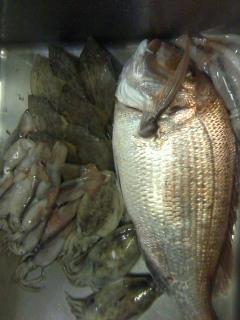 宇和島からお魚到着!