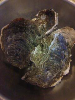 夏の岩牡蠣、入荷です!