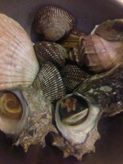 夏は貝類が充実してきますね!!