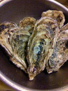 石巻の岩牡蠣!