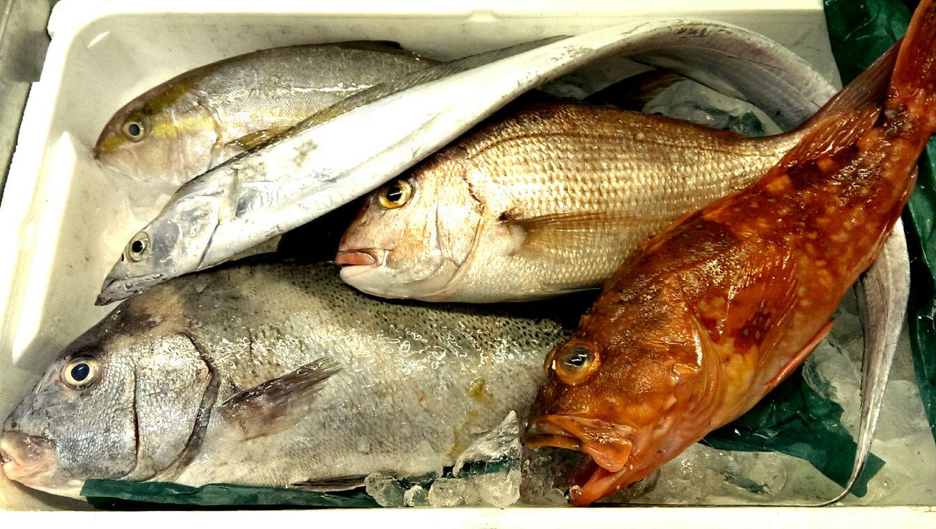今日は太刀魚にカンパチ、カサゴetc.