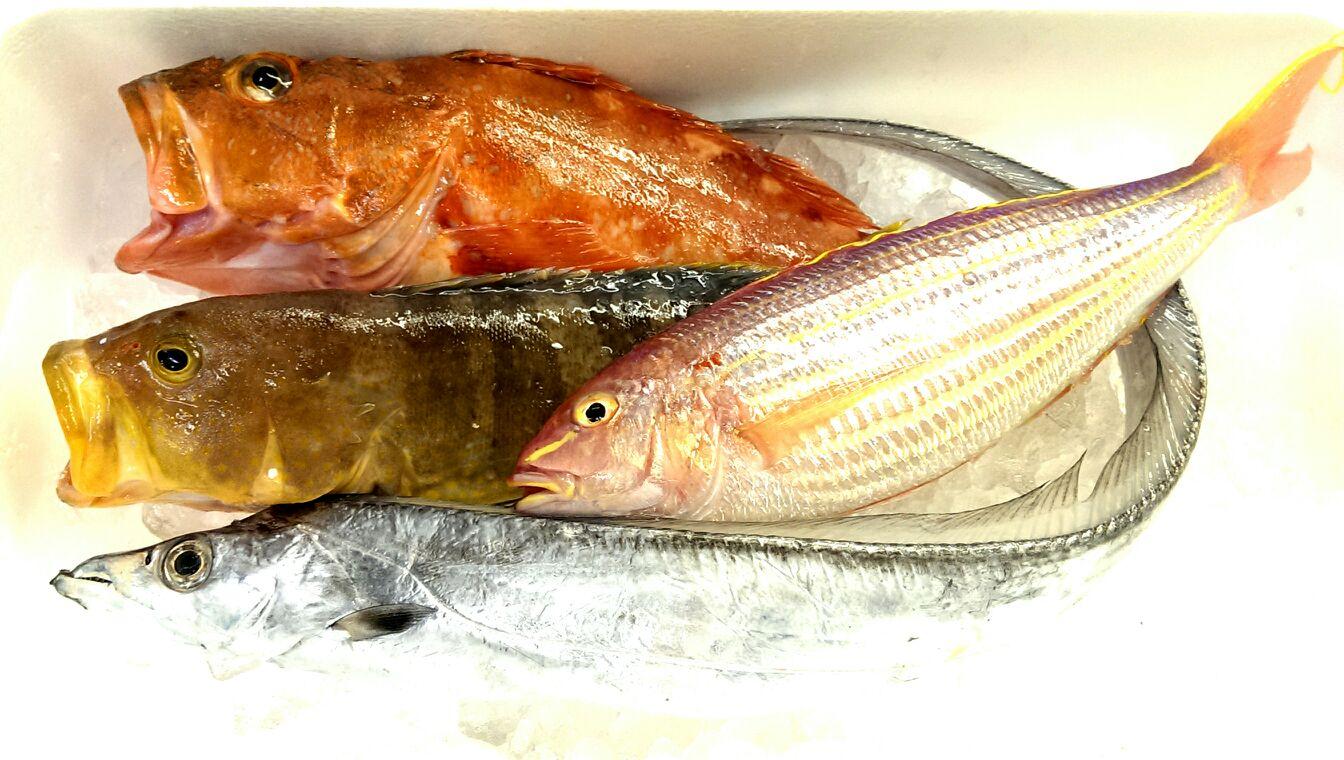 五島の太刀魚に特大カサゴ!