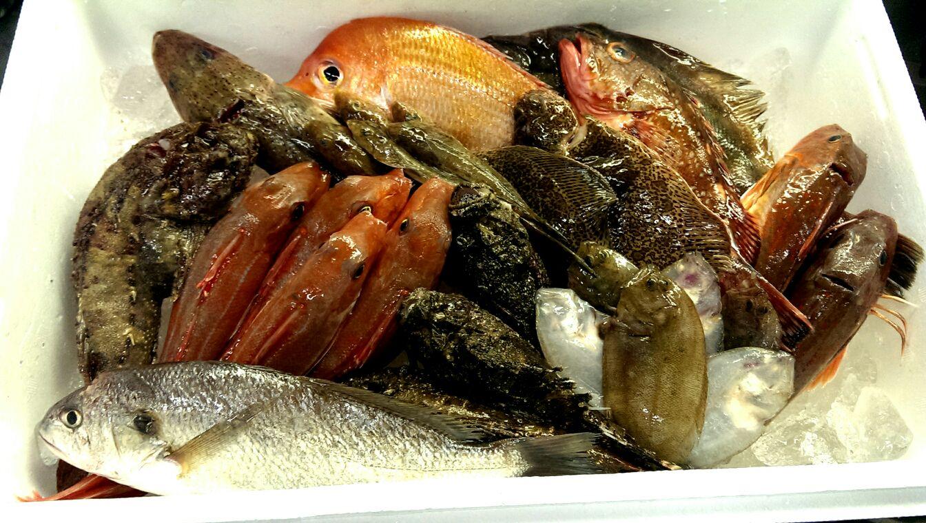 新潟、村上の漁師さんから、直送便!オコゼもきたよ!