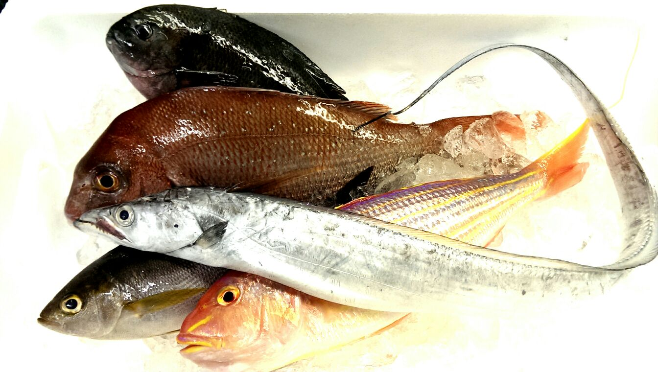 長崎から太刀魚!