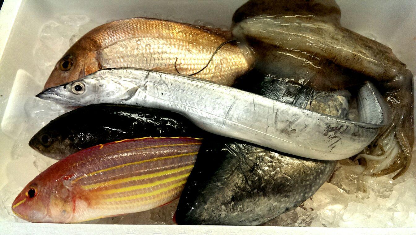 釣り真鯛にメジに…