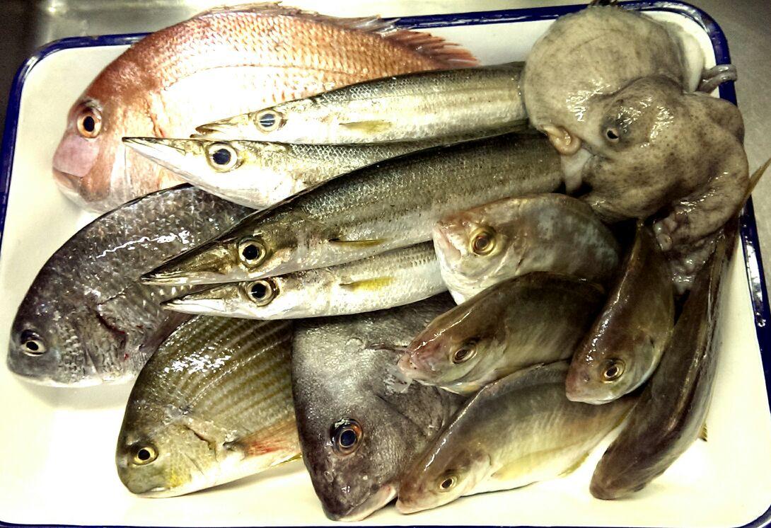 宇和島から鯛が大漁♪(笑)