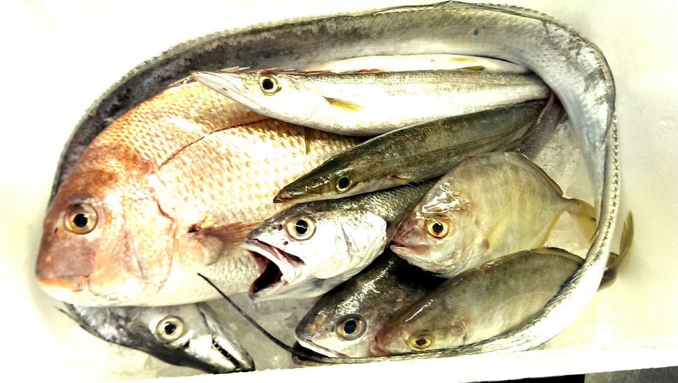 脂の乗った真鯛、太刀魚、カマス!