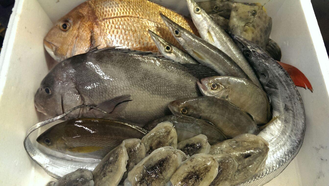 特大のマダイにカマス、太刀魚!宇和島から漁師直送便!