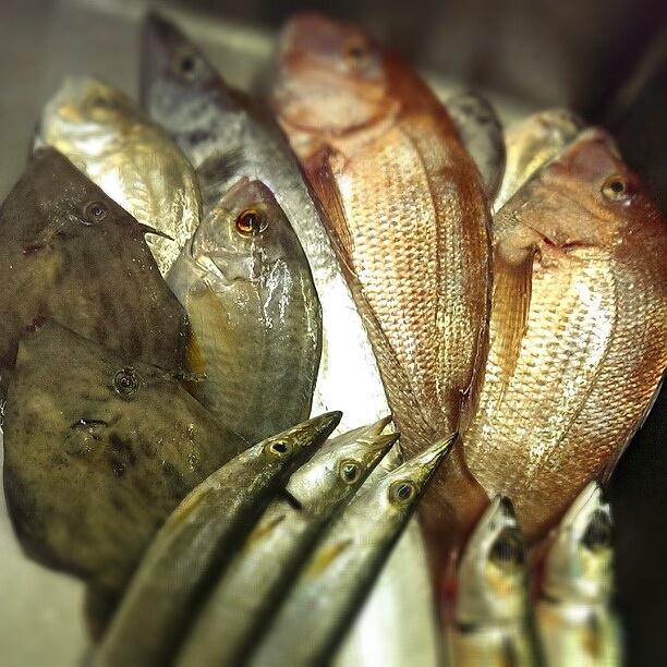 真鯛に太刀魚、カマス、カイワリ♪