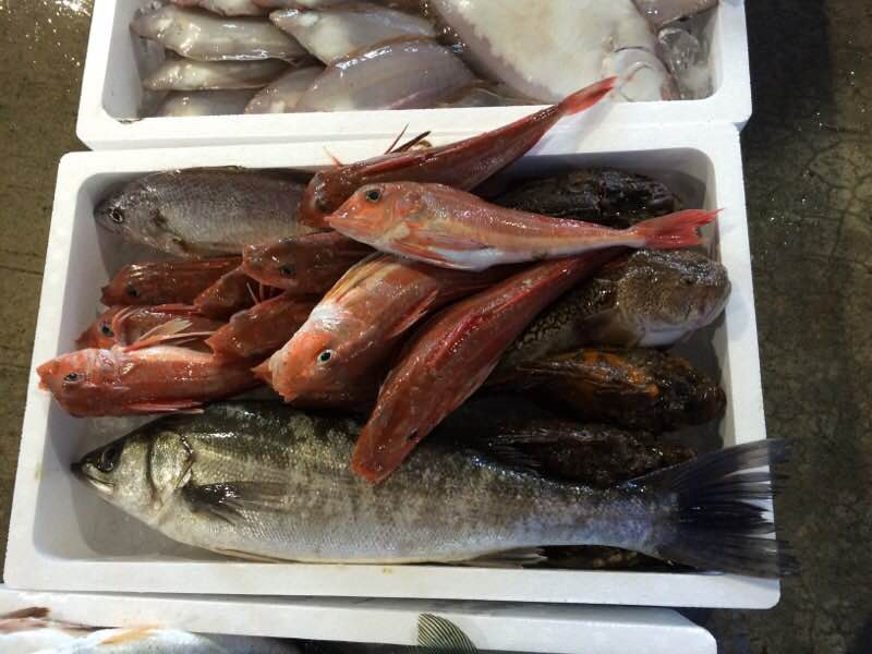 予告‼今日も村上から漁師直送便‼