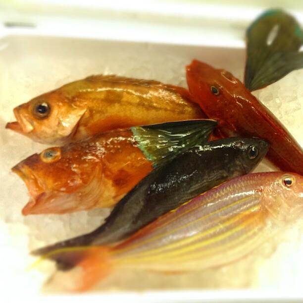 長崎から地魚♪カサゴもあるよ!