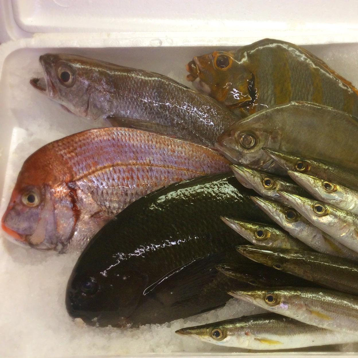 宇和島から脂ノリノリなお魚たち♪
