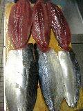 ブリ釣りでも宗田鰹